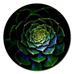 Nature Desktop Flora Color Pattern Magnet 5  (round)