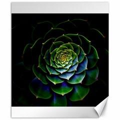 Nature Desktop Flora Color Pattern Canvas 8  X 10