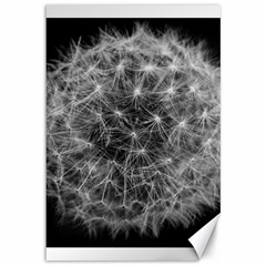 Dandelion Fibonacci Abstract Flower Canvas 12  X 18