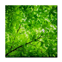 Green Wood The Leaves Twig Leaf Texture Tile Coasters