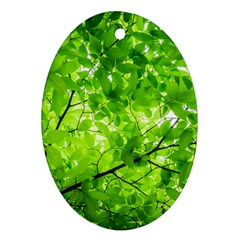 Green Wood The Leaves Twig Leaf Texture Ornament (oval)