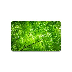 Green Wood The Leaves Twig Leaf Texture Magnet (name Card)