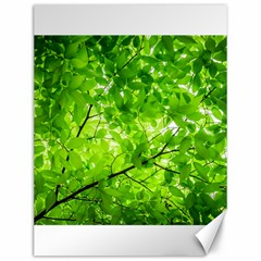 Green Wood The Leaves Twig Leaf Texture Canvas 12  X 16