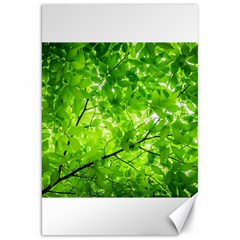 Green Wood The Leaves Twig Leaf Texture Canvas 20  X 30