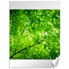 Green Wood The Leaves Twig Leaf Texture Canvas 36  X 48