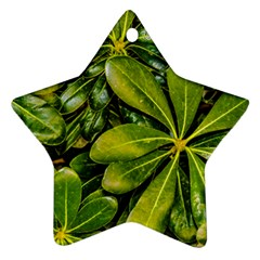 Top View Leaves Ornament (star) by dflcprints