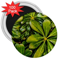 Top View Leaves 3  Magnets (100 Pack) by dflcprints