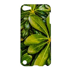 Top View Leaves Apple Ipod Touch 5 Hardshell Case by dflcprints
