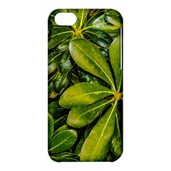 Top View Leaves Apple Iphone 5c Hardshell Case by dflcprints