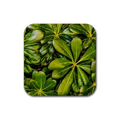Top View Leaves Rubber Coaster (square)  by dflcprints