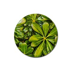Top View Leaves Magnet 3  (round) by dflcprints