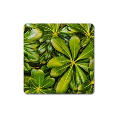 Top View Leaves Square Magnet by dflcprints