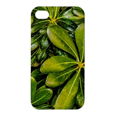 Top View Leaves Apple Iphone 4/4s Hardshell Case by dflcprints
