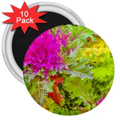 Colored Plants Photo 3  Magnets (10 Pack)  by dflcprints