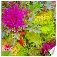 Colored Plants Photo Canvas 12  X 12   by dflcprints