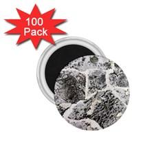 Coquina Shell Limestone Rocks 1 75  Magnets (100 Pack)