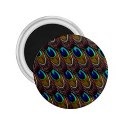 Peacock Feathers Bird Plumage 2 25  Magnets