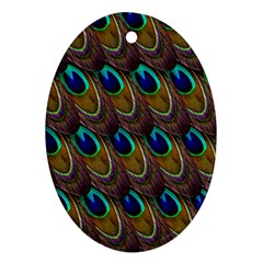 Peacock Feathers Bird Plumage Oval Ornament (two Sides)