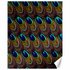 Peacock Feathers Bird Plumage Canvas 11  X 14