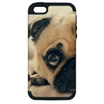 Pouty Pug case Apple iPhone 5 Hardshell Case (PC+Silicone)
