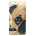 Pouty Pug case Apple iPhone 5 Hardshell Case with Stand