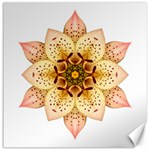 Asiatic Lily II Flower Mandala Canvas 20  x 20