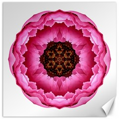 Pink Peony I Flower Mandala Canvas 12  X 12