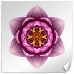 Water Lily X Flower Mandala Canvas 20  X 20