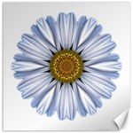 White Daisy I Flower Mandala Canvas 12  x 12