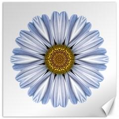 White Daisy I Flower Mandala Canvas 16  X 16