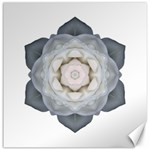 White Rose I Flower Mandala Canvas 20  x 20