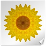 Yellow Sunflower II Flower Mandala Canvas 12  x 12