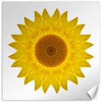 Yellow Sunflower II Flower Mandala Canvas 16  x 16