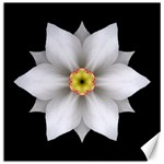White Daffodil II Flower Mandala Canvas 16  x 16