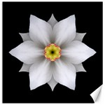 White Daffodil II Flower Mandala Canvas 20  x 20