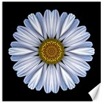 White Daisy I Flower Mandala Canvas 16  x 16