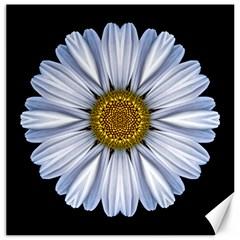 White Daisy I Flower Mandala Canvas 20  X 20