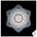 White Rose I Flower Mandala Canvas 12  x 12