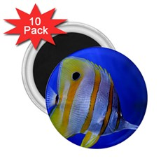 Butterfly Fish 1 2 25  Magnets (10 Pack)  by trendistuff
