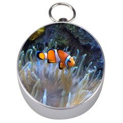 Clownfish 2 Silver Compasses by trendistuff