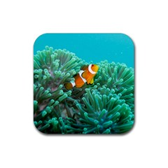 Clownfish 3 Rubber Square Coaster (4 Pack)  by trendistuff
