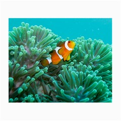 Clownfish 3 Small Glasses Cloth (2 Side) by trendistuff