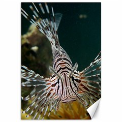 Lionfish 4 Canvas 12  X 18