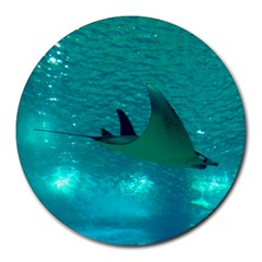 Manta Ray 1 Round Mousepads