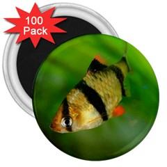 Tiger Barb 3  Magnets (100 Pack) by trendistuff