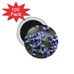 Blueberries 2 1 75  Magnets (100 Pack)  by trendistuff