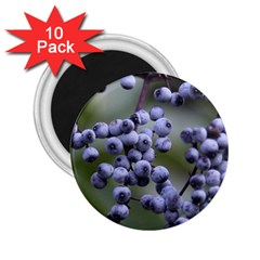 Blueberries 2 2 25  Magnets (10 Pack)  by trendistuff
