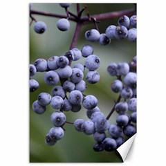 Blueberries 2 Canvas 24  X 36  by trendistuff