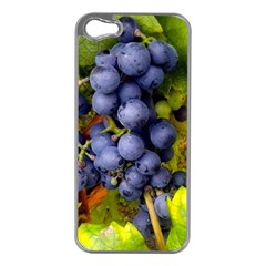 Grapes 1 Apple Iphone 5 Case (silver)
