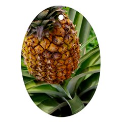 Pineapple 2 Ornament (oval) by trendistuff